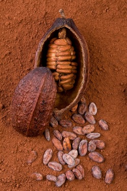 Benefits of Raw Cacao Beans